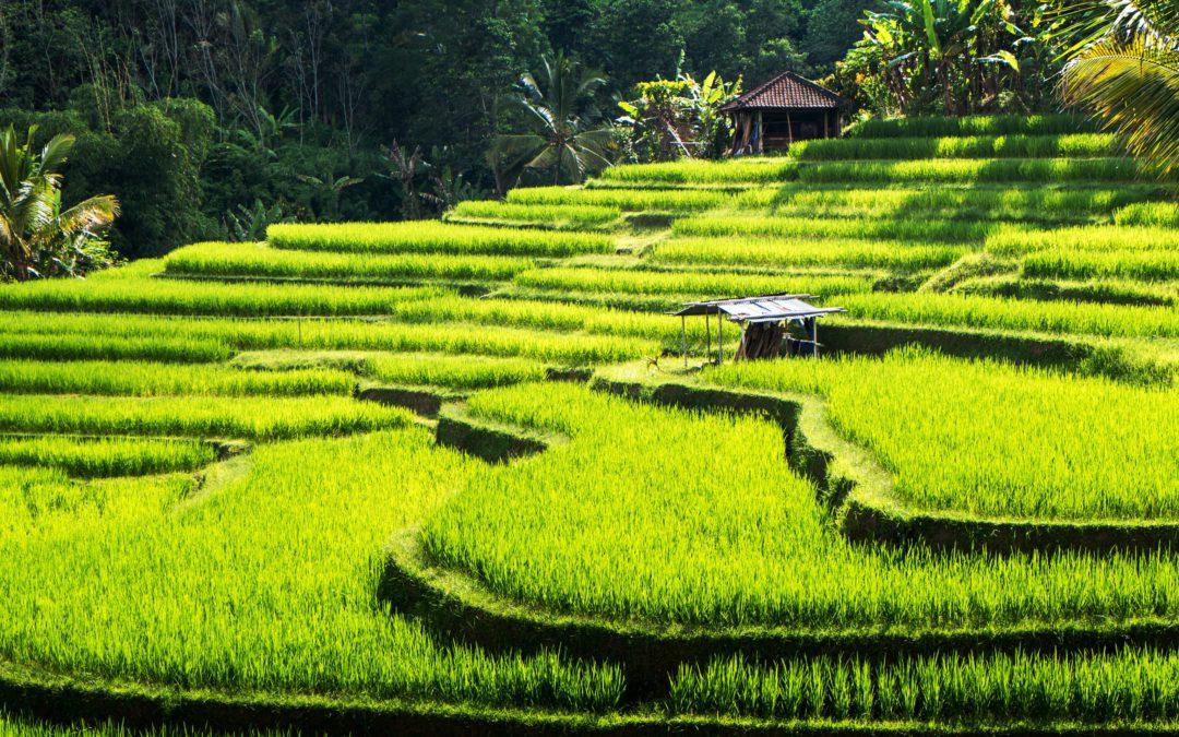 Transcedent Bali