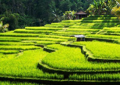 Transcendent Bali