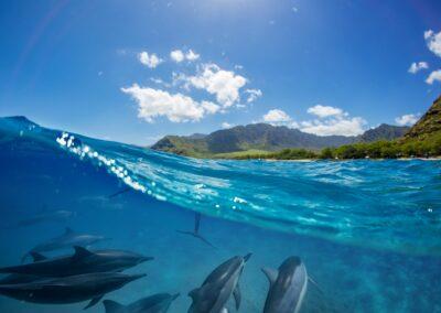 La Réunion Spectaculaire